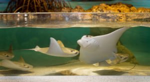 You Can Pet Real Live Sharks And Sting Rays At The Largest Aquarium In Massachusetts