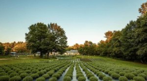 Sleep Under The Stars At This Maine Lavender Farm For An Experience Unlike Any Other