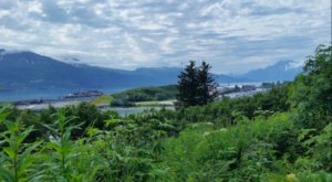 Wildflowers Will Surround You On This Enchanting And Easy Spring Hike Through Alaska