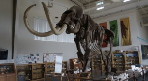 The Little-Known Fossil Center In Northern California Thats Perfect For A Family Day Trip
