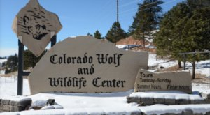 Not Many People Know About This Wolf Sanctuary Right Here In Colorado