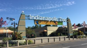 Play With Dolphins At This Indiana Zoo For An Absolutely Adorable Adventure