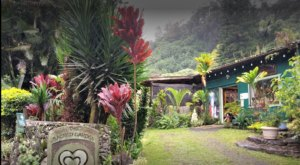 Find Peace At This Sacred Garden Tucked Away Off The Beaten Path In Hawaii