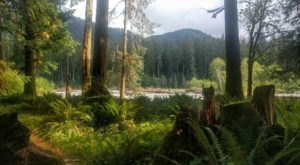 7 Secluded Campgrounds In Washington You've Never Heard Of