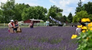 Get Lost In This Beautiful Lavender Farm In Maryland