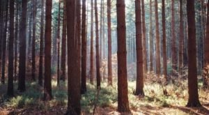 The Enchanting Pine Forest In Ohio That Will Leave You Mesmerized