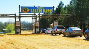 Adventure Awaits At This Drive-Thru Safari Park In Alabama