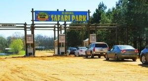 Adventure Awaits At This Drive-Thru Safari Park In Alabama