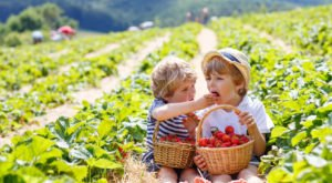 Take The Whole Family On A Day Trip To This Pick-Your-Own Strawberry Farm In Arizona