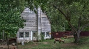 There's A Bed And Breakfast On This Goat Farm In Connecticut And You Simply Have To Visit