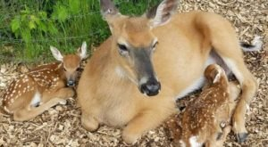 The One Of A Kind Deer Park In Wisconsin That Your Kids Will Absolutely Love
