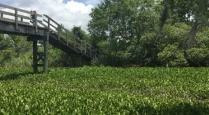 The Magnificent Bridge Trail Near New Orleans That Will Lead You To A Hidden Overlook