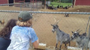 The Awesome City Park In North Carolina With A Zoo That Doesn't Cost A Dime