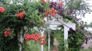 Visit This Flower Farm In Wisconsin For That Beautiful Scenic Experience You Crave