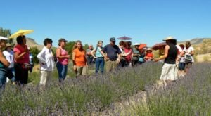 Colorado's Annual Lavender Festival Belongs On Your Summertime Bucket List