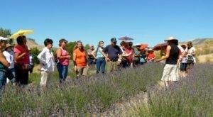 Colorado's Annual Lavender Festival Belongs On Your Summertime Bucket List