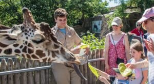 Play With Giraffes At This Detroit Zoo For An Absolutely Adorable Adventure