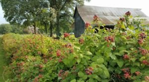 You Can Pick The Most Delicious Berries All Summer Long At This Ohio Farm