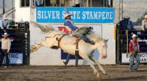 This Rodeo Extravaganza Will Take Your Love Of Nevada To A Whole New Level