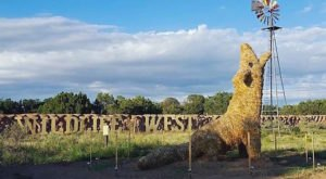 This Walk-Through Safari Park In New Mexico Is The Best Way To See Wildlife Up Close
