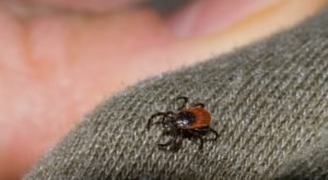 You Won't Be Happy To Hear That South Dakota Is Experiencing A Major Surge Of Ticks This Year
