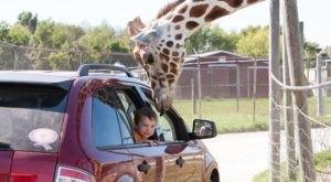 Adventure Awaits At This Drive-Thru Safari Park Near Cleveland