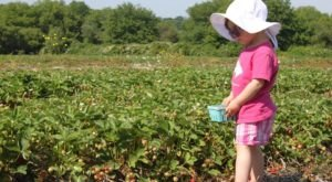 You'll Have Loads Of Fun At These 8 Pick-Your-Own Fruit Farms In Rhode Island