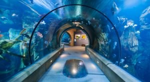 Sleep With Sharks When You Spend The Night At This Oregon Aquarium