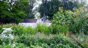 Pick Your Own Flowers At This Charming Farm Hiding In Detroit