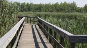 This Buffalo Park Has Endless Boardwalks And You'll Want To Explore Them All