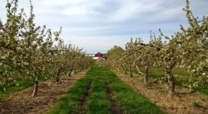 You Can Pick Fruit And Sip Wine At This Unique Wisconsin Orchard