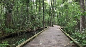 7 Short And Sweet Summer Hikes In Louisiana With Amazing Views