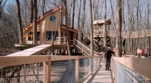 There's A Tree House Village Coming To Ohio And It's Just As Epic As It Sounds