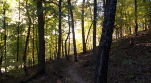 This 1.9-Mile Hike In Missouri Takes You Through An Enchanting Forest