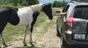 The Wild Horse Tour In Kentucky That Shows Off The Beauty Of This Area Of The State