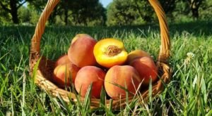 You Can Pick The Most Delicious Peaches All Summer Long At This Missouri Orchard