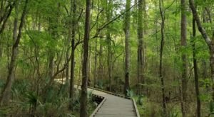 7 Shaded Trails In Louisiana That Are Perfect For Summer Adventures