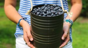 This Blueberry Festival In South Carolina Is The Perfect Place To Pick Your Own Berries This Summer