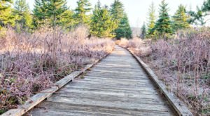 The Fairytale Cranberry Boardwalk In West Virginia That Stretches As Far As The Eye Can See