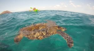 Paddle With Sea Turtles On This One-Of-A-Kind Kayak Tour In Hawaii