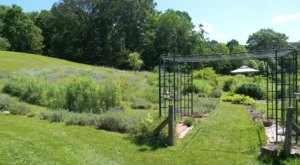 Get Lost In A Blooming Labyrinth On This Lavender Farm In Massachusetts