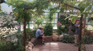 The Butterfly House And Bug Zoo In Michigan That Are Perfect For A Unique Family Day Trip