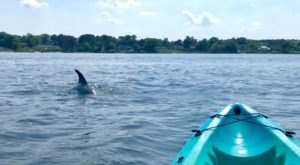 Paddle With Dolphins On This One-Of-A-Kind Kayak Tour In Virginia