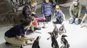 Play With Penguins At This Arizona Aquarium For An Absolutely Adorable Adventure