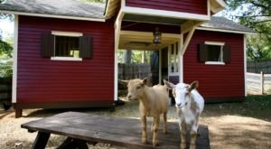 Spend The Night On A Goat Farm At This Unique Retreat In Georgia