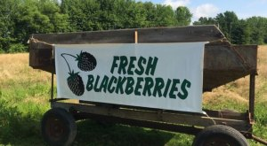 Here Are The 7 Sweetest Places To Go Berry Picking In Maryland