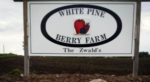 Take The Whole Family On A Day Trip To This Pick-Your-Own Strawberry Farm In Wisconsin