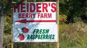 You Can Pick The Most Delicious Berries All Summer Long At This Illinois Orchard