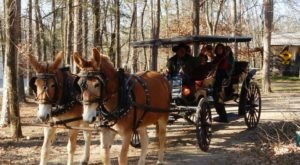 Take A Carriage Ride Through The Mountains For A Truly Unique Arkansas Experience
