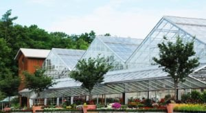 The Largest Butterfly House In Kentucky Is A Magical Way To Spend An Afternoon